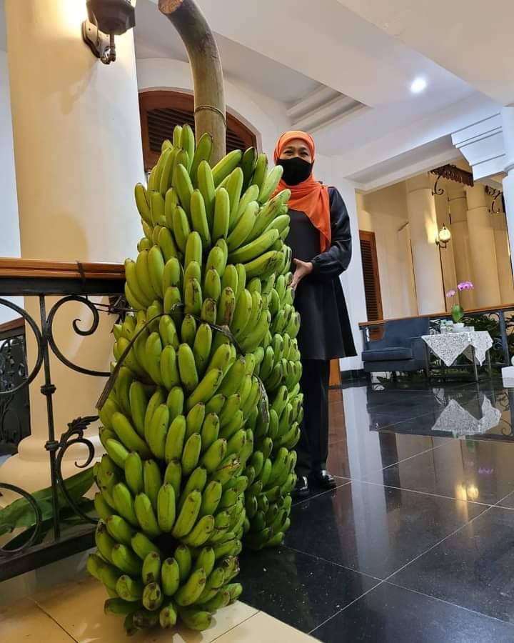 Gubernur Jatim, Khofifah saat memegang pisang hijau berukuran besar di kantornya. (Foto: Akun IG Khofifah.ip )