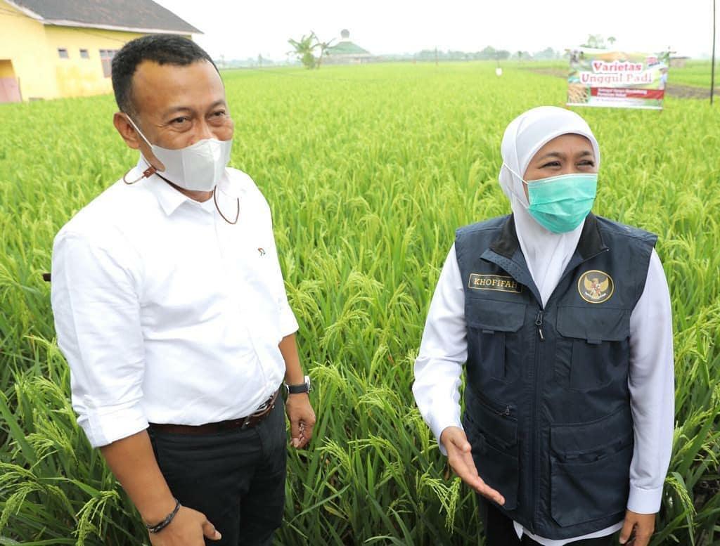 Gubernur Jatim, Khofifah IP saat meninjau lahan pertanian beberapa waktu yang lalu/ Istimewa